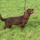 frenn-puppy-class